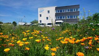 Sanitätshaus Pfänder Engagement Blumenwiese Bienenweide